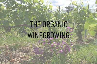The Organic Winegrowing
